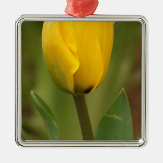 Yellow Tulip Silver-Colored Square Decoration