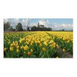 Yellow Tulip Flowers Field Windmill Landscape
