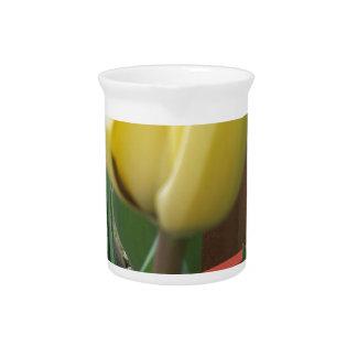 Yellow tulip pitchers
