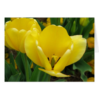 Yellow Tulip - Spring Flower Opening Wide! Card
