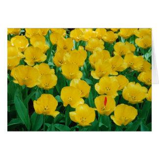 Yellow Tulips Card