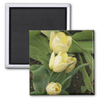 Yellow Tulips Magnet
