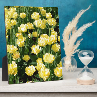 Yellow Tulips Plaques