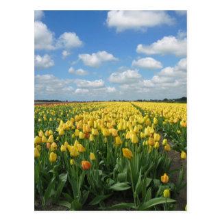 Yellow Tulips Postcard