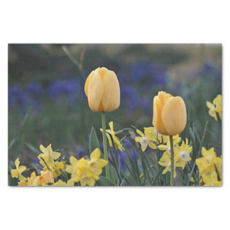 Yellow tulips tissue paper