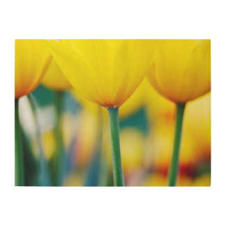 Yellow Tulips with Turquoise Wood Print