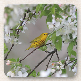 Yellow Warbler and Spring Blossoms Coaster