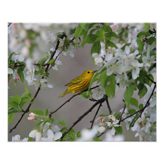 Yellow Warbler and Spring Blossoms Poster