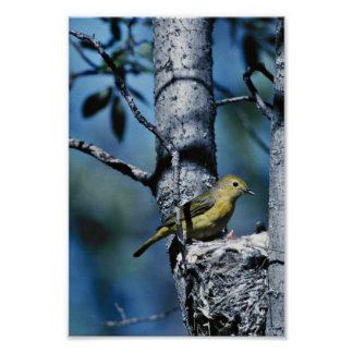 Yellow warbler attends to its nest poster