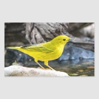 Yellow Warbler Bird Gifts and Accessories Rectangular Sticker