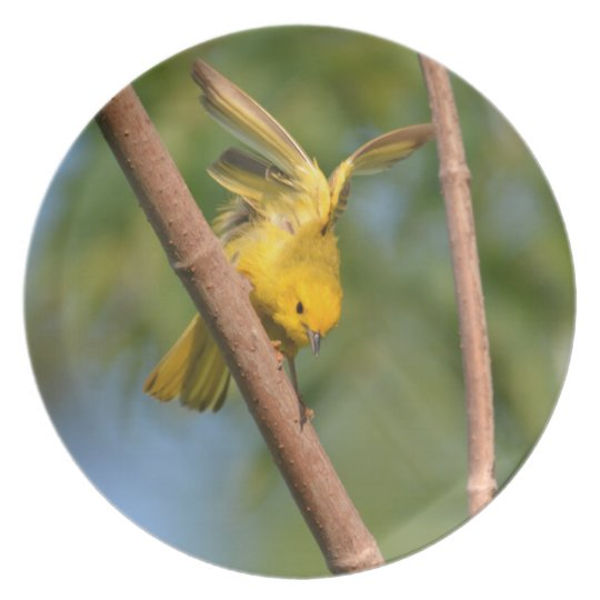 Yellow Warbler plate