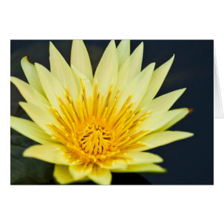 Yellow Water Lily Blank 5x7 Greeting Card
