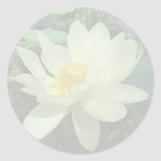 Yellow Water Lily Gift Sticker