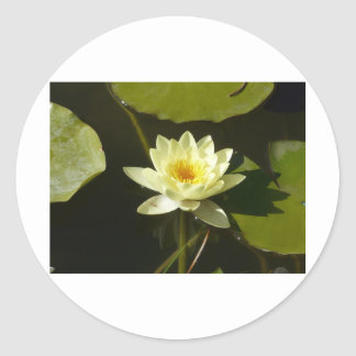 yellow water lily stickers