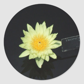 Yellow Water Lily Round Sticker