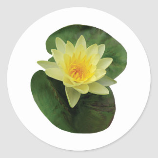 Yellow Water Lily Sticker