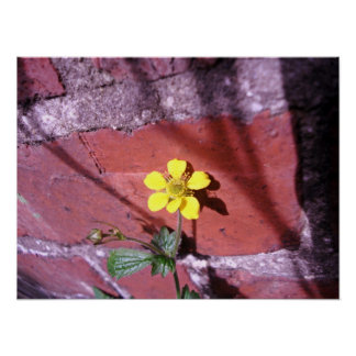 Yellow Weed flower Poster