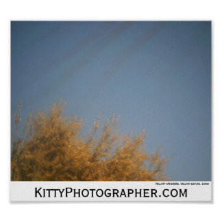 Yellow Whiskers Yellow Leaves poster