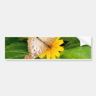 yellow white butterfly moth bumper sticker