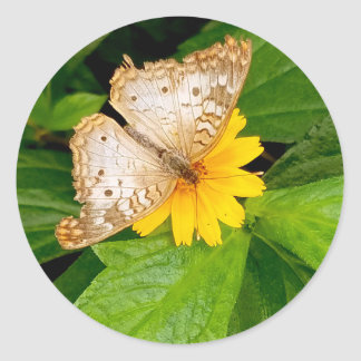 yellow white butterfly moth classic round sticker