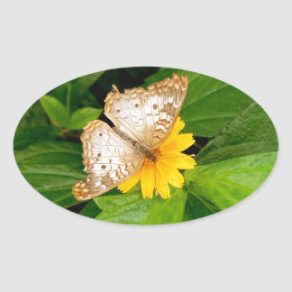 yellow white butterfly moth oval sticker