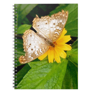 yellow white butterfly moth spiral notebook