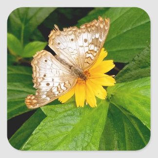yellow white butterfly moth square sticker