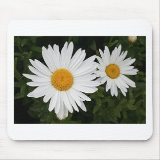 Yellow & white Daisies: flowers in bloom Mousepads