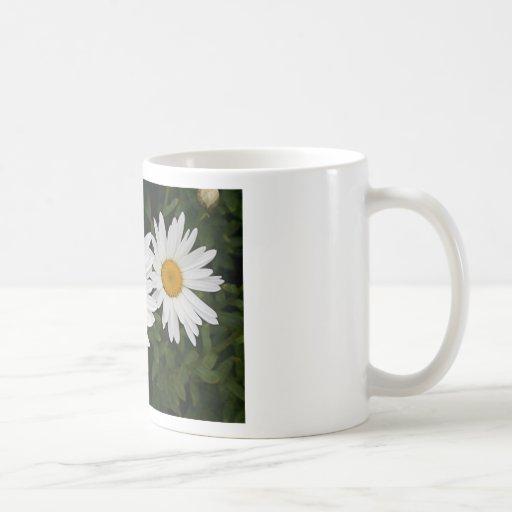 Yellow & white Daisies: flowers in bloom Mug