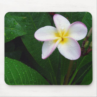 Yellow & White Hawaiian Plumeria Flower Mousepad