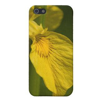 Yellow Wild Iris iphone 4 case gift idea