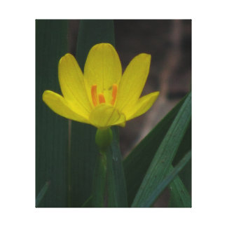 Yellow Wildflower Stretched Canvas Prints