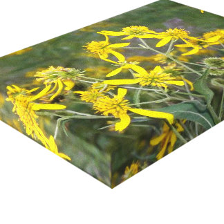 Yellow Wildflower Canvas Stretched Canvas Prints