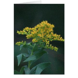 Yellow Wildflower Cards