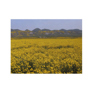 Yellow Wildflower Field Landscape Wood Poster