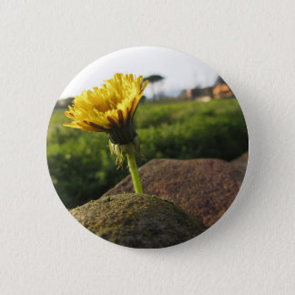 Yellow wildflower growing on stones at sunset 6 cm round badge