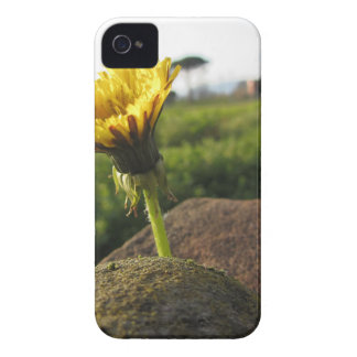 Yellow wildflower growing on stones at sunset iPhone 4 case
