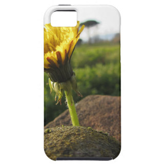 Yellow wildflower growing on stones at sunset iPhone 5 cover