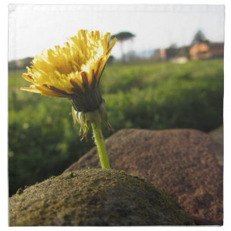 Yellow wildflower growing on stones at sunset napkin