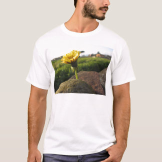 Yellow wildflower growing on stones at sunset T-Shirt