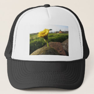 Yellow wildflower growing on stones at sunset trucker hat