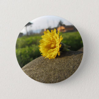 Yellow wildflower lying on a stone at sunset 6 cm round badge
