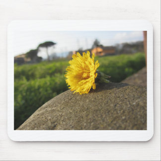 Yellow wildflower lying on a stone at sunset mouse pad