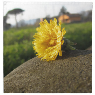 Yellow wildflower lying on a stone at sunset napkin