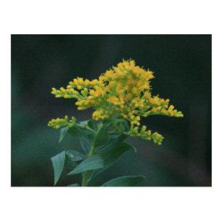 Yellow Wildflower Postcard