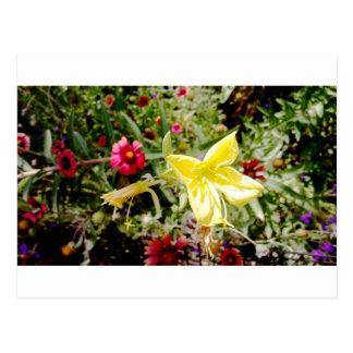 Yellow Wildflower Postcards