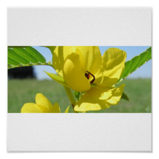 Yellow Wildflower Posters