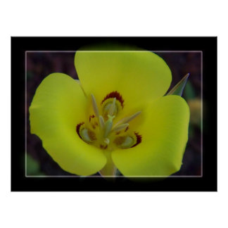 Yellow Wildflower Print