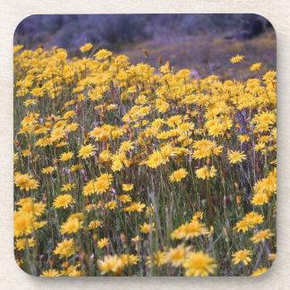 Yellow Wildflowers Beverage Coaster