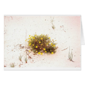 Yellow Wildflowers in White Sand Greeting Card